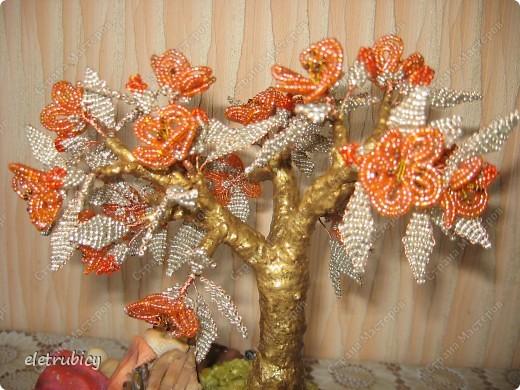 Персиковое дерево фото 4