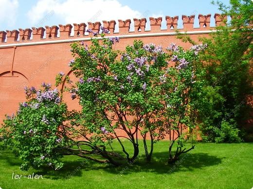 Приглашаю вас на фотопрогулку в Московский Кремль. Фотографии сделаны в разное время года, поэтому погода и освещение разное. Современные очертания Кремль приобрел в 15 веке. Он построен в форме неправильного треугольника. Протяженность стен с башнями -2235метров. С учетом рельефа местности возведены стены высотой от5 до 19 метров (это будет заметно на фотографиях).  Это наверное визитная карточка Кремля- Спасская башня. Названа так по образу Спаса Нерукотворного, расположенного над парадными проездными воротами башни. Слева 14-й корпус Кремля — административный корпус, о нем скажу позднее.  фото 39