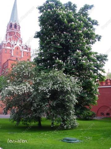 Приглашаю вас на фотопрогулку в Московский Кремль. Фотографии сделаны в разное время года, поэтому погода и освещение разное. Современные очертания Кремль приобрел в 15 веке. Он построен в форме неправильного треугольника. Протяженность стен с башнями -2235метров. С учетом рельефа местности возведены стены высотой от5 до 19 метров (это будет заметно на фотографиях).  Это наверное визитная карточка Кремля- Спасская башня. Названа так по образу Спаса Нерукотворного, расположенного над парадными проездными воротами башни. Слева 14-й корпус Кремля — административный корпус, о нем скажу позднее.  фото 43