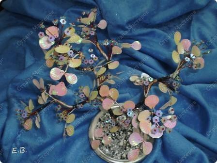 Мой сад фото 2
