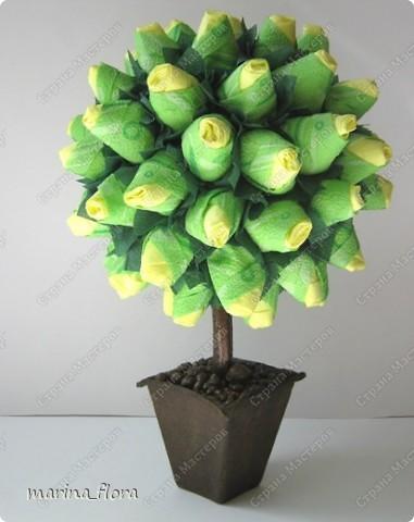 Сегодня в распоряжении флористов довольно большая коллекция роз зеленых сортов.  фото 2