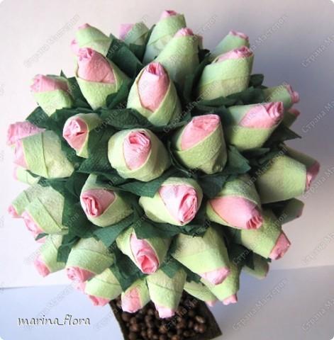 Сегодня в распоряжении флористов довольно большая коллекция роз зеленых сортов.  фото 5