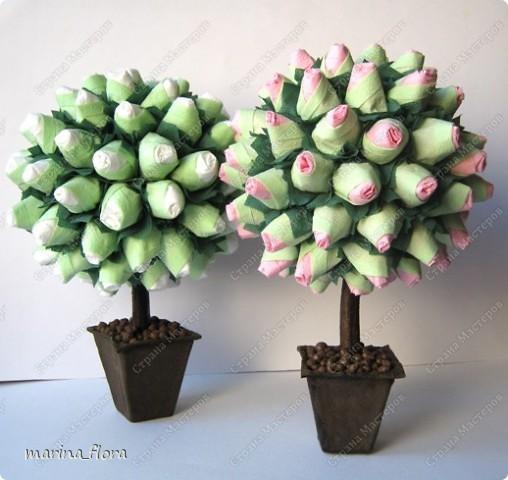 Сегодня в распоряжении флористов довольно большая коллекция роз зеленых сортов.  фото 8