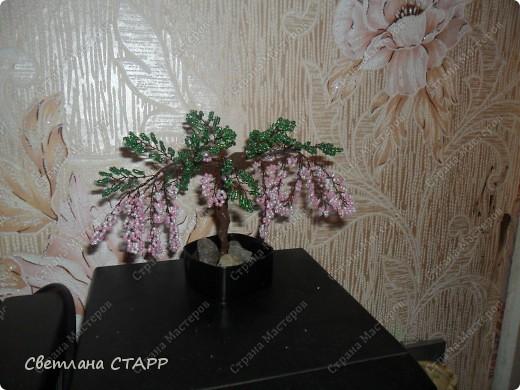 дерево еще одно фото 4