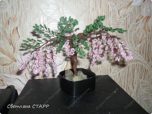 дерево еще одно фото 3