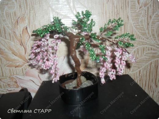 дерево еще одно фото 2