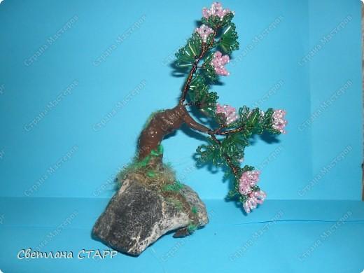 Щит и роза фото 6
