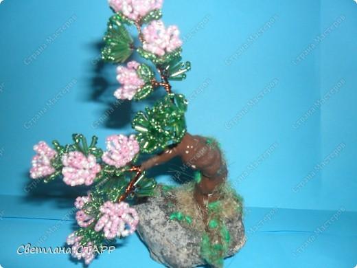 Щит и роза фото 2