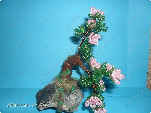 Щит и роза фото 3