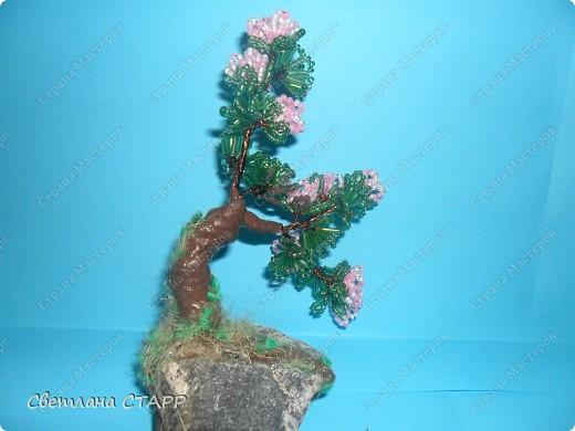 Щит и роза фото 4