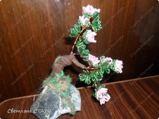 Щит и роза фото 7