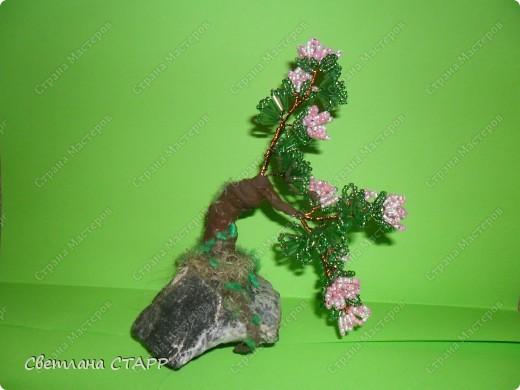 Щит и роза фото 1