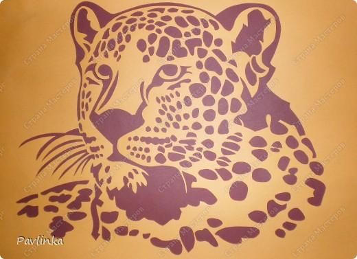 Тигр-самое красивое и грациозное животное, как и все  семейство кошачьих.