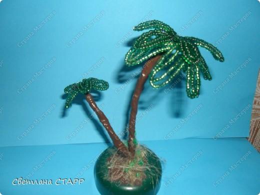 Бисероплетение - пальма-2 из бисера.