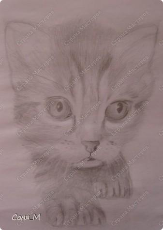Котенок - Матрын фото 3