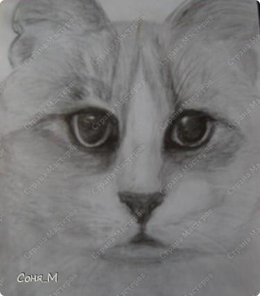 Котенок - Матрын фото 6