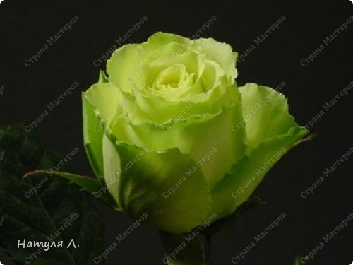 Огромное спасибо Марине!!!!!! Именно по её МК я училась....  http://stranamasterov.ru/node/173296 фото 10