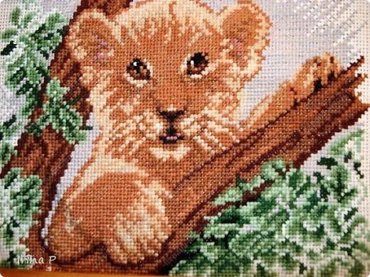 Тигруша. фото 1