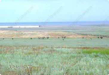 Это  наша  степь, в которой мы живем. На многие сотни киллометров она  простирается вокруг нашего Ремонтненского района  Ростовской области. Хоть мы и Ростовская облась, но Ростов от нас 600км.Чуть ближе Ставрополь-220км, и уж совсем  близко, каких то 100км- Элиста.А это уже Калмыкия. Так что  граничим мы со Стовропольским краем и Калмыкией... фото 5