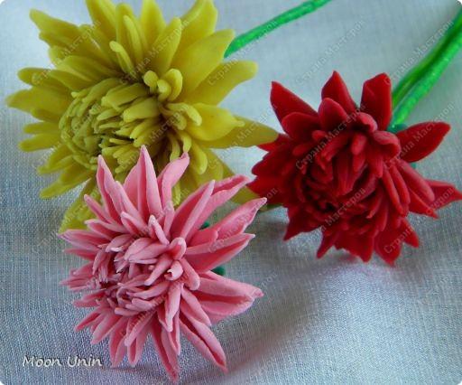 Хризантемы фото 2