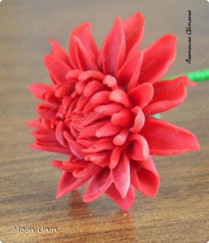 Хризантемы фото 7