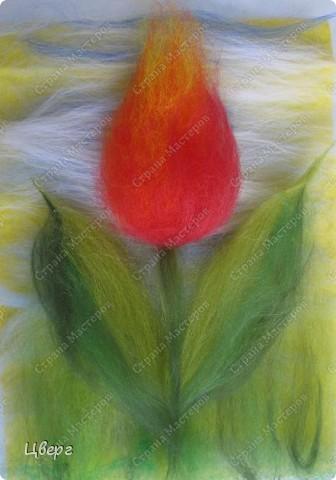 Тюльпан. фото 18