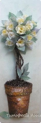 Вот и у меня расцело розовое дерево)  фото 3