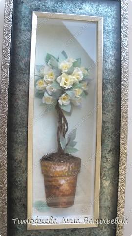 Вот и у меня расцело розовое дерево)  фото 4