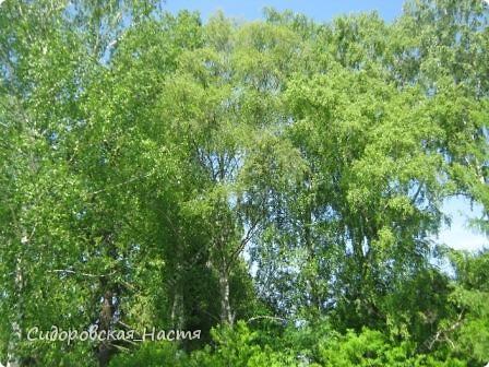 Тюльпан-мутант)) Был красным, а теперь побелел, стал Чернобыльским)) фото 9