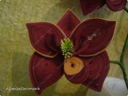 Вот такую орхидею я сделала на одном дыхании! фото 2