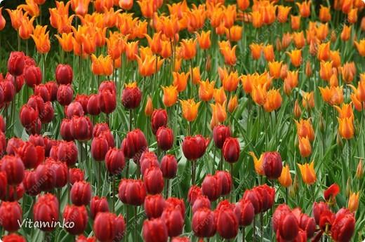 Прошлую неделю провела в Москве. Очень люблю бывать здесь весной - невероятное количество цветов везде и всюду. Не достать фотоаппарат - просто преступление)) фото 7