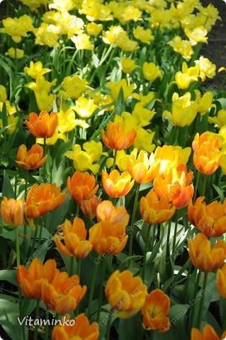 Прошлую неделю провела в Москве. Очень люблю бывать здесь весной - невероятное количество цветов везде и всюду. Не достать фотоаппарат - просто преступление)) фото 12