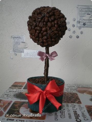 Долго смотрела на мастериц кофейных деревьев и вот решила тоже сделать, но долго не решалась зарегистрироваться на сайте, а теперь потихоньку представляю свои поделки.  Вот это дерево самое первое и оно осталось дома. фото 2