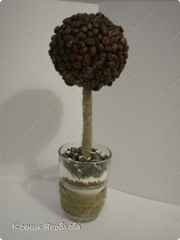 Долго смотрела на мастериц кофейных деревьев и вот решила тоже сделать, но долго не решалась зарегистрироваться на сайте, а теперь потихоньку представляю свои поделки.  Вот это дерево самое первое и оно осталось дома. фото 5