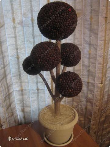 Заказали большое кофейное дерево. Оно будет стоять на полу. Получилось высотой примерно 65 см. Использовала ветку, пенопластовые шарики, которые вырезала сама. Посадила в гипс и украсила сизалью.