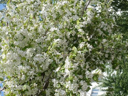 Белоснежная яблонька. фото 3