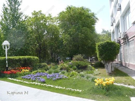 Белоснежная яблонька. фото 13