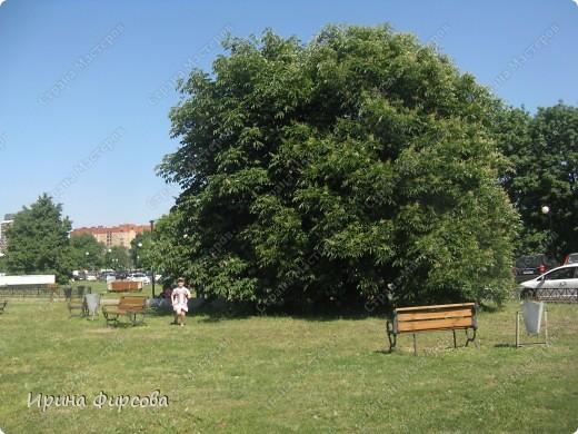 Итак, в час дня мы приехали в Парк Горького. Как и было заявлено - вход свободный. Ура! Но, как только мы вошли - народу - ТЬМА!!!Жарко!!! фото 21