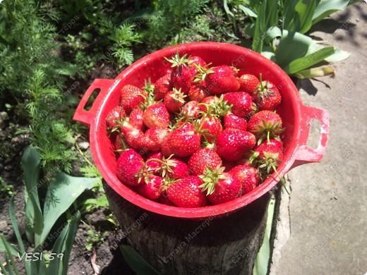Первые сладкие ягоды.... фото 1