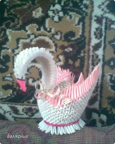 мой первый лебедь!!!!!!!!!!!!