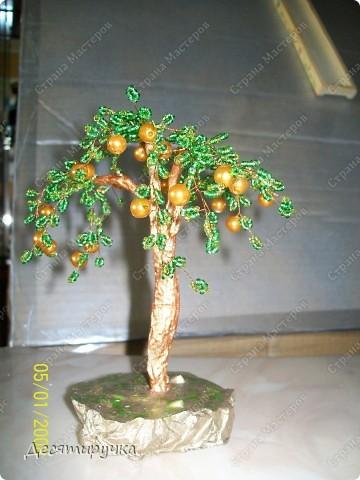 яблоня с золотыми плодами фото 1