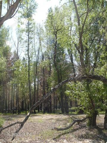 Природа Нижней Тавды фото 5