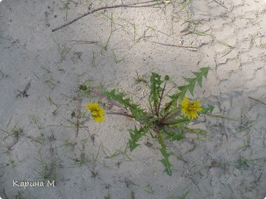 Природа Нижней Тавды фото 11