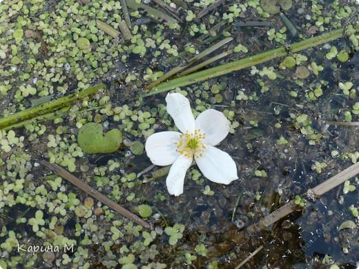 Природа Нижней Тавды фото 27