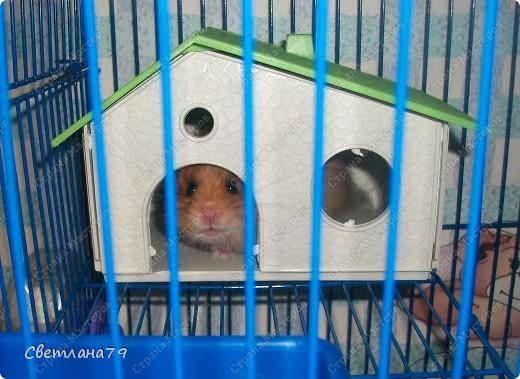 Совсем недавно у нас появился новый жилец, хомячок. Назвали мы его Хомкой. фото 8