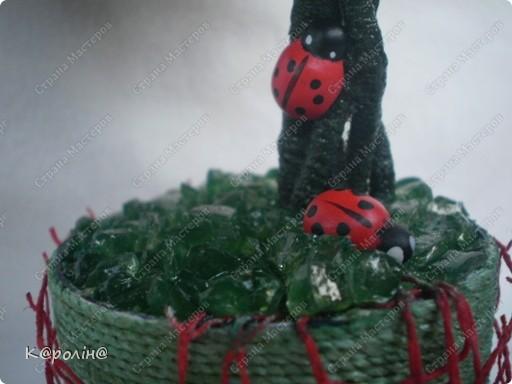 Моє деревце фото 3