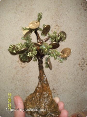 мое денежное дерево