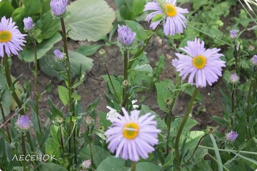 """Вот такое настроение и такая работа родилась, глядя на столь чудесное творение природы, цветок, который растет у нас в саду. Дицентру называют ласково и немного грустно: """"Разбитое сердце"""" по-русски, """"Сердечко Жаннетты"""" по-французски, """"Цветок сердца"""" по-немецки, """"Истекающее кровью сердце"""" по-английски... И все за оригинальную форму цветков: они напоминают маленькое расколотое пополам сердечко.    Наши с Вами сердца племенные, страстные, любящие, заботливые, ласковые, нежные и просто материнские.  Очень хочется, что бы Ваши сердца ни когда не унывали, не расстраивались, не печалились, всегда любили, радовались, бились в унисон с любимыми людьми.                       Любите друг друга, радуйтесь каждому дню, цените друг друга, радуйтесь детским шалостям и улыбкам своих детей, хвалите их, обнимайте, целуйте часто и будьте счастливы!!! Мы желаем Вам это от всего сердца…  фото 16"""