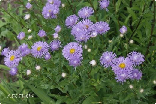 """Вот такое настроение и такая работа родилась, глядя на столь чудесное творение природы, цветок, который растет у нас в саду. Дицентру называют ласково и немного грустно: """"Разбитое сердце"""" по-русски, """"Сердечко Жаннетты"""" по-французски, """"Цветок сердца"""" по-немецки, """"Истекающее кровью сердце"""" по-английски... И все за оригинальную форму цветков: они напоминают маленькое расколотое пополам сердечко.    Наши с Вами сердца племенные, страстные, любящие, заботливые, ласковые, нежные и просто материнские.  Очень хочется, что бы Ваши сердца ни когда не унывали, не расстраивались, не печалились, всегда любили, радовались, бились в унисон с любимыми людьми.                       Любите друг друга, радуйтесь каждому дню, цените друг друга, радуйтесь детским шалостям и улыбкам своих детей, хвалите их, обнимайте, целуйте часто и будьте счастливы!!! Мы желаем Вам это от всего сердца…  фото 17"""