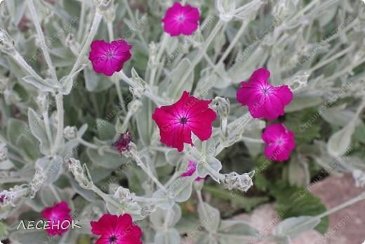 """Вот такое настроение и такая работа родилась, глядя на столь чудесное творение природы, цветок, который растет у нас в саду. Дицентру называют ласково и немного грустно: """"Разбитое сердце"""" по-русски, """"Сердечко Жаннетты"""" по-французски, """"Цветок сердца"""" по-немецки, """"Истекающее кровью сердце"""" по-английски... И все за оригинальную форму цветков: они напоминают маленькое расколотое пополам сердечко.    Наши с Вами сердца племенные, страстные, любящие, заботливые, ласковые, нежные и просто материнские.  Очень хочется, что бы Ваши сердца ни когда не унывали, не расстраивались, не печалились, всегда любили, радовались, бились в унисон с любимыми людьми.                       Любите друг друга, радуйтесь каждому дню, цените друг друга, радуйтесь детским шалостям и улыбкам своих детей, хвалите их, обнимайте, целуйте часто и будьте счастливы!!! Мы желаем Вам это от всего сердца…  фото 14"""